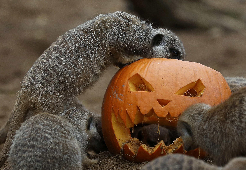 El Obispado de Cdiz en contra de Halloween Pblico