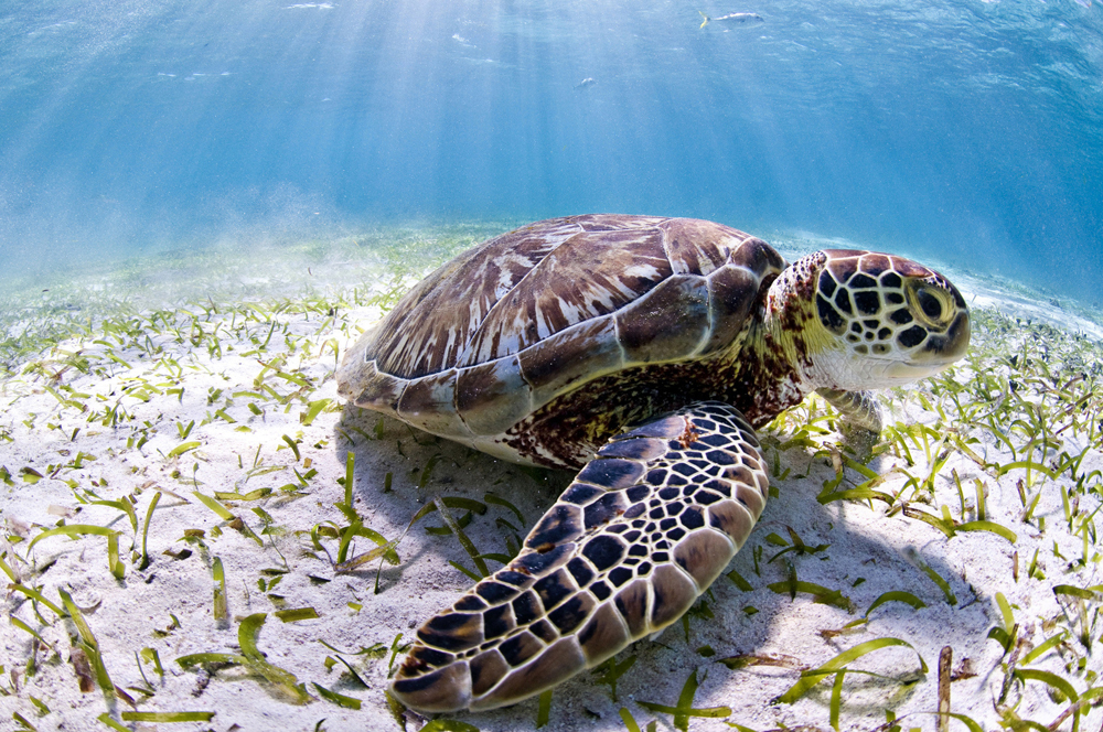 Resultado de imagen para tortugas peligro de extincion causas