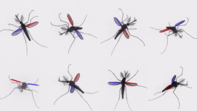 C mo consiguen volar los mosquitos p blico - Como ahuyentar los mosquitos ...
