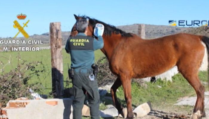 Carne De Caballo Detenidas 65 Personas En España Por Venta De Carne De Caballo No Apta Para Consumo Público