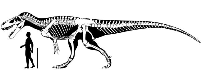 Dinosaurios Hallan En Asturias Restos De Los Dinosaurios Carnivoros Mas Grandes De Europa Diario Publico Последние твиты от dinosaurios (@dinosauriosmx). dinosaurios hallan en asturias restos