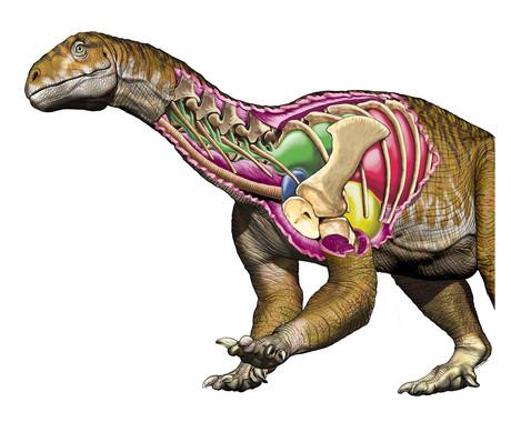 Dinosaurios El Primer Dinosaurio Gigante Tiene Nombre Femenino Publico Te presentamos la nueva app de imagenes de dinosaurios, podras disfrutar de una hermosa seleccion de fotos de dinosaurios y ademas tienes la posibilidad de compartirla con tus amigos en las redes sociales. el primer dinosaurio gigante tiene