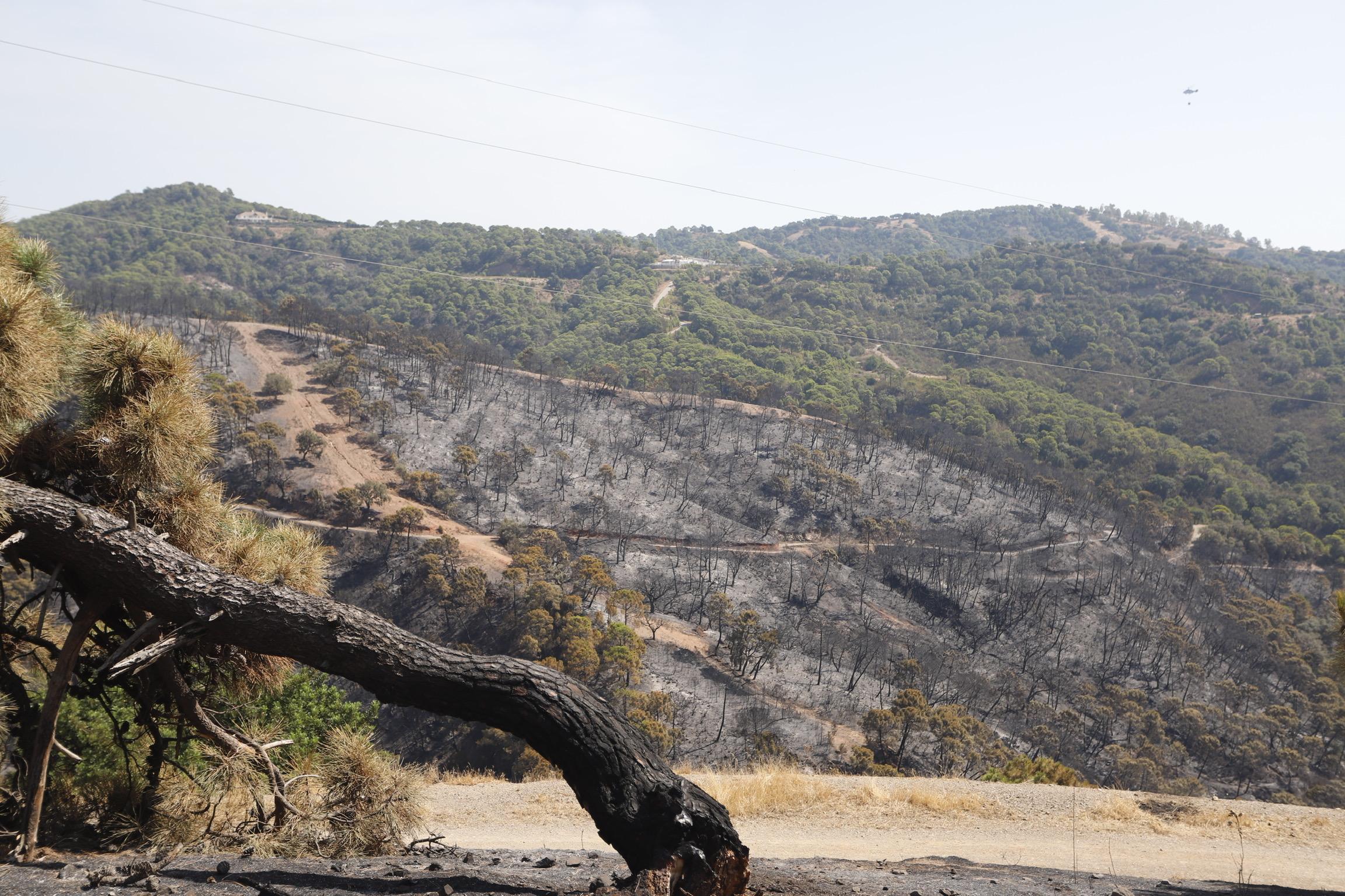 El Incedio de Sierra Bermeja causante de problemas estomacales en la población