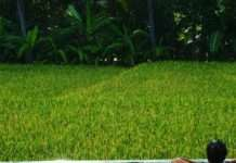 Relajándome en la piscina de la villa que compartía con otrxs nómadas digitales, después de unas horas de trabajo frente al portátil. Con vistas a los campos de arroz en Ubud (Bali, Indonesia)