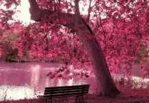 Diez destinos espectaculares para ver cerezos en flor