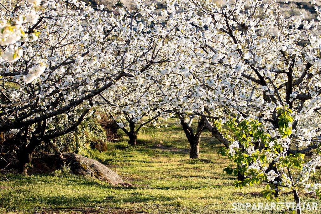 Diez Destinos Espectaculares Para Ver Cerezos En Flor 5 Sin Parar De
