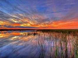 Everglades (Estados Unidos)