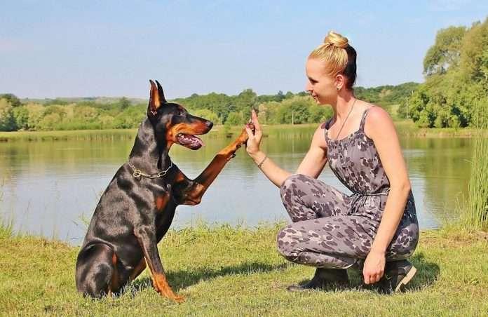 Estas webs te ofrecen alojamiento gratis si cuidas la mascota de otra persona