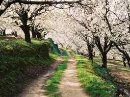Los campos de flores más bonitos de España