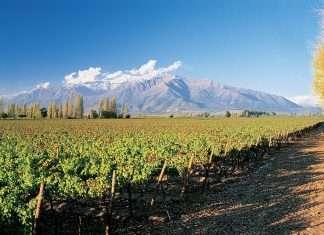 Los países con mejores viñedos del planeta