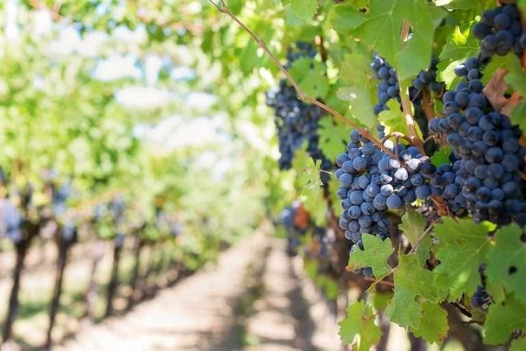 8 rutas del vino en Castilla y León