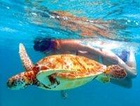 aventura-de-tortugas-marinas-y-buceo-de-superficie-en-la-bah-a-akumal-in-cozumel-37328